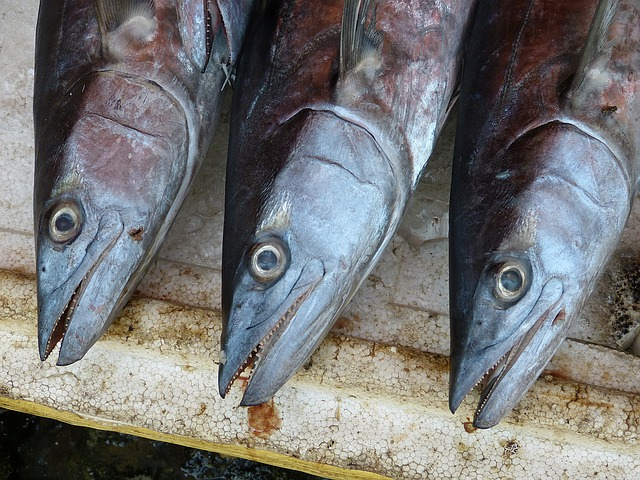 Raport: jakie ryby są w słoiczkach HIPP?