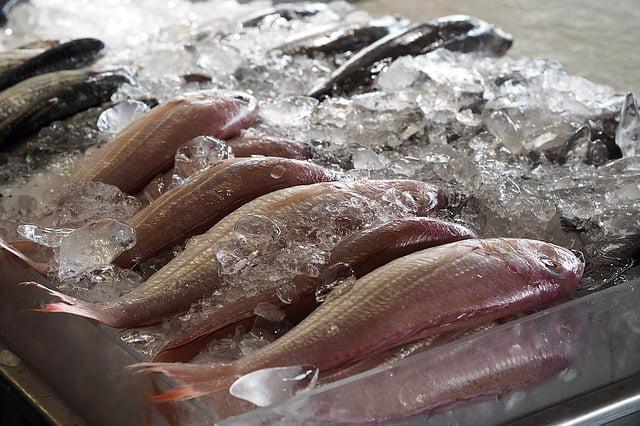 Ryby – zdrowe czy szkodliwe?